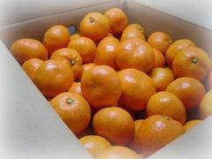 【こうの家】こだわりの味自慢 贈答用 完熟南柑みかん 5k