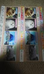 共通入場引換券2枚上野動物園/多摩動物公園/葛西臨海水族園 他