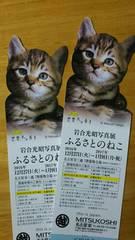 可愛い子猫 写真家・岩合光照 「ふるさとのねこ」 写真展 チケット2枚