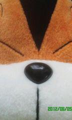 猫ちゃんデカ顔