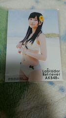 AKB48ラブラドールレトリバー指原莉乃特典写真