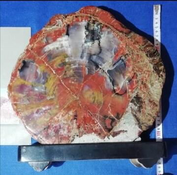北米アリゾナ産 珪化木 化石 標本