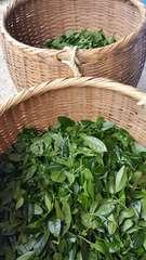 ★2017新茶*星野茶★お茶で有名な奥八女(星野村)の冠茶