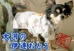 ANNY'S DOGS 龍刺繍の甚平 2S★新品 〜2kg位