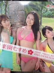 【パチンコ 楽園むすめ】非売品パンフレット&DVDセット