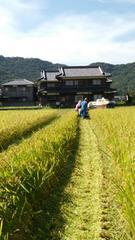 30年産新米★キヌヒカリ(兵庫のブランド米)玄米25�s農家直送