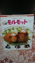 小動物ビギナーガイド モルモット(送料無料)